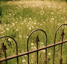 Love gates and the meadow flowers