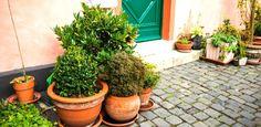 Plantas medicinais para cultivar no jardim