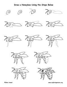 Honeybee Drawing Lesson