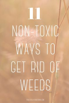 These non-toxic ways to get rid of weeds will help you reclaim your yard and garden without using harsh chemicals!