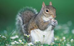 images of squirrels - Google Search