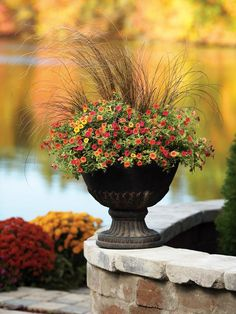 Proven Winners - Container Garden Design - Structure in Container Gardening and How to Plant Diy Garden, Garden Landscaping, Landscaping Ideas, Garden Tips, Shade Garden, Fall Containers, Succulent Containers, Fall Planters, Autumn Planter Ideas