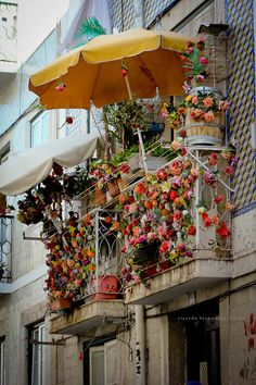 Decked our for the Festas Lisboa Every June 12 -13 Bairro Alto Lisbon