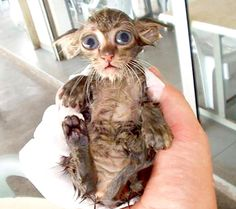 Do you have a towel?