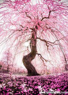 Günün Olumlaması : Sevgi ve şifa ile sarılmış olarak yaşamayı seçiyorum. Huzurlu ve güvendeyim, en doyumlu şekilde kendimi ifade ediyorum. Görülüyor, kabul ediliyor,onaylanıyorum... #gününolumlaması #bybegumkarace #iyilikmerkezi #günegüzelbaşla #27042016 #onaylanıyorum #pembe #huzurluyum #tekraret #olumludüşün