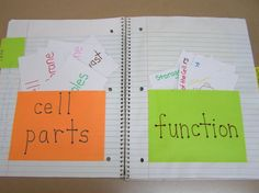 Cells in interactive notebooks