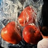 Very Beautiful and Amazing paintings by Ukrainian artist Sergey Piskunov Art Paintings For Sale, Amazing Paintings, Oil Paintings, Plastic Girl, Realistic Oil Painting, Orange Fruit, Camille Pissarro, Photorealism, Buy Prints