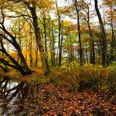 https://flic.kr/p/N7dj5n   drieluik autumn @ zoogenbrink