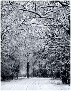 Winter Road by ~SebastianKraus on deviantART