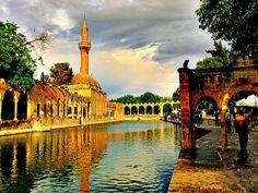 Balikli Göl/ Abraham's Lake.  The carp are considered sacred here.  Şanlıurfa  / Turkey
