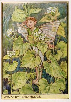 JackByTheHedge Flower Fairy Vintage Print c1950 by TheOldMapShop