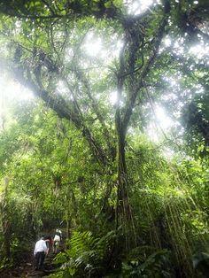 North Colombia ,Hiking to Ciudad Perdidad