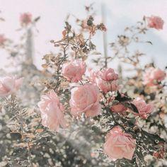 Pin on Flower Power Peach Aesthetic, Spring Aesthetic, Nature Aesthetic, Flower Aesthetic, Retro Aesthetic, Aesthetic Pastel, Dark Flowers, Pastel Flowers, Simple Flowers