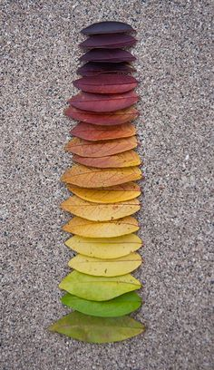 nature rainbow - Andy Goldsworthy~~ we can all do this. next Fall go outside and look for colorful leaves. have fun! That is ART. Land Art, Art Et Nature, Nature Study, Things Organized Neatly, Environmental Art, Natural Forms, Autumn Leaves, Color Inspiration, Color Schemes