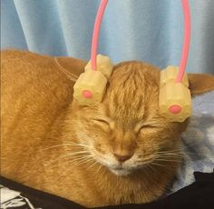 Cat massage wheel roller