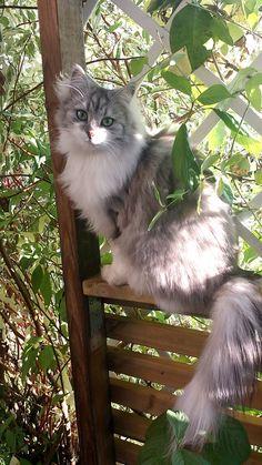 ourmim: Même si je ne suis pas un amoureux des chats, ceci est une jolie image ...