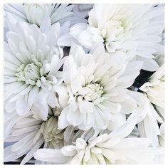 + white flowers +