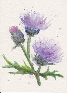 https://flic.kr/p/aavr5E | Thistle ATC 2 | ATC made for swap-bot, March 2011. Watercolour pencil.