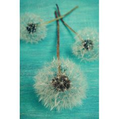 Found it at Wayfair - Make a Wish Photographic Print on Wrapped Canvas