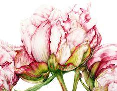 The Watercolor Members Club | Marie Burke Art