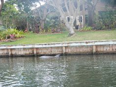 Dolphins along one of the sea walls on the Indian River Lagoon.  Join supecoadventures to check out this beautiful area