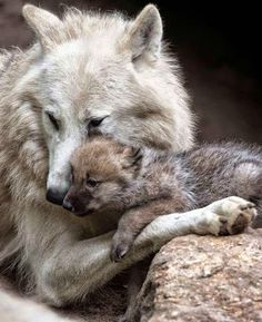 nothing like mom's love Dogs Heart Me - Google+