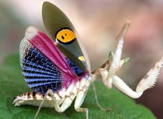 animals cute science biology insects praying mantis weird animals animal biology