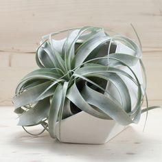 Janelle Gramling Designs Large Tabletop Gem Planter