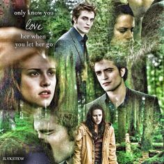 Bella and Edward twilight saga Twilight Saga New Moon, Twilight Saga Series, Twilight Edward, Edward Bella, Twilight Movie, Edward Cullen, Catherine Hardwicke, Twilight Pictures, Drama Free
