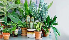 Je veux des plantes mais je manque de place !