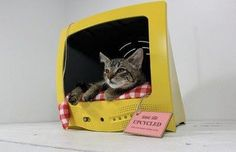 Cute cat house.  Made from an empty tv cabinet.