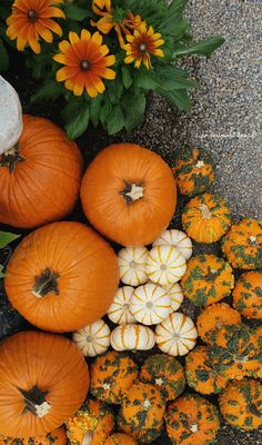 It's that time of the year for me… time to stock up on pumpkins for the season. Autumn Aesthetic, Autumn Photography, Best Seasons, Fall Pictures, Partys, Hello Autumn, Samhain, Holidays Halloween, Autumn Inspiration