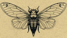 Cicada... These are the guys that play the music in the trees in summertime... and one of the species is so loud that it has the same db from a as a running lawn-mower that is over 3 feet away! That is so loud that it can cause hearing loss!