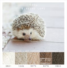 How to Keep an Amazing Hedgehog Pet - Miles with Pets Hedgehog Pet Cage, Hedgehog Care, Hedgehog Animal, Baby Hedgehog, Hedgehog Tattoo, Yarn Color Combinations, Colour Schemes, Hedgehog Colors, Colour Pallette