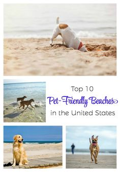 If a beach vacation is on your mind, be sure to check out these top 10 pet-friendly beaches in the United States. Which one is your favorite? Family Friendly Dogs, Dog Friendly Hotels, Dog Travel, Travel Chic, Travel Tips, Travel Destinations, Hiking Dogs, Dog Beach, Dog Activities