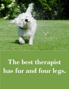 Dogs The best therapist has fur and four legs. Sharing is caring, don't forget to share ! Pug Quotes, Dog Quotes Funny, Animal Quotes, Dog Sayings, Funny Dogs, Animal Signs, Funny Sayings, Cute Puppies, Cute Dogs