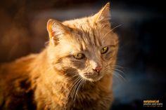 My Cat by Reinhard Loher on Animals, Nature, Animales, Animaux, Animal, Animais