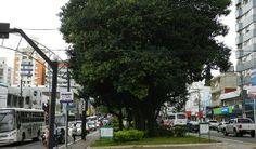 Grupo Ecológico Sentinela dos Pampas: Substituição de árvores do centro em estudo