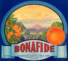 Bonafide Brand Orange