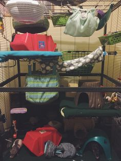 New setup after cage cleaning! Fluffy Animals, Cute Animals, Fancy Rat, Cute Rats, Scratching Post, Coffee Lover Gifts, Cat Life, Guinea Pigs, Cuddle