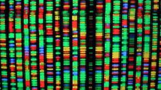 Synthetic human genome project releases its draft timeline  #bioinformatics #biology #biotechnology #geneticmapping #genetics #genome #Genomics #humangenome #humangenome #HumanGenomeProject #Minimalgenome #Referencegenome #Technology_Internet #WellcomeTrust Check more at https://scifeeds.com/social-media-item/synthetic-human-genome-project-releases-its-draft-timeline/