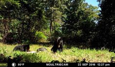 Hunters Take Notice!!! 168 acres with Bears, Turkeys & Deer Oh My! Owner has trail photos of all three! What a place to have family and visitors come and share the great outdoors & nature with you. Open pastures and wooded, fenced & cross fenced, 2 ponds, 1 of the two 20x30 barns has a loft & electric. This farm has two wells, lots of garden space & fruit trees. The 2,000 sq ft 3 bedroom home just needs your finishing touch, includes all appliances! in Norwood MO