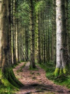 The Forest, Brecon Beacons National Park, Wales, U.K. Wales Uk, South Wales, Forest And Wildlife, Brecon Beacons, Fantasy Places, Magical Forest, Parks N Rec, Walk In The Woods, Great Britain