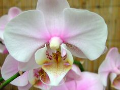 Photo taken in the Zoological & Botanical Garden, Hong Kong. Moth Orchid, Orchidaceae, Botanical Gardens, Orchids, Flowers, Plants, Photography, Ann, Trees