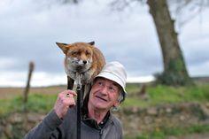 Irlandês socorre filhotes de raposa que agora são seus melhores amigos