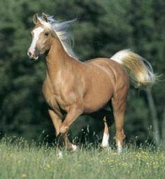 Palomino Horse... my favorite coloring !!