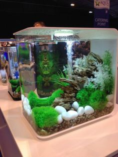 You'll find the new biOrb FLOW a really easy aquarium to set up and own.
