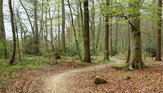 Laarzenpad Ruurlo. 6 km. Prachtig, langs bosranden. Start: Pannenkoekenhuis De Heikamp Hengeloseweg 2 Ruurlo. Er is ook een doolhof. Voor de kleintjes is er een kabouterpad van 1,5 km