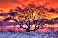 I'll always love naked trees...