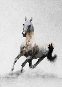 Horses - Andreas Lie